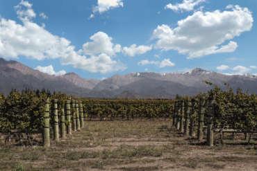"""Nota Diario Los Andes: """"Cada nueva cosecha es un renacer"""""""